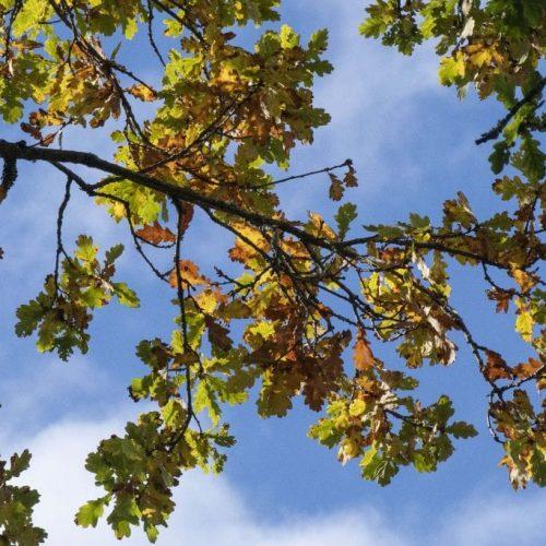 1 ! DSC_5259 Autumn oak branch EC Reduced