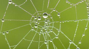 Dew laden spiral cobweb.