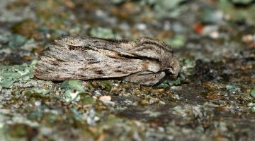 9 DSC_6706 Sprawler side view EC --(1)