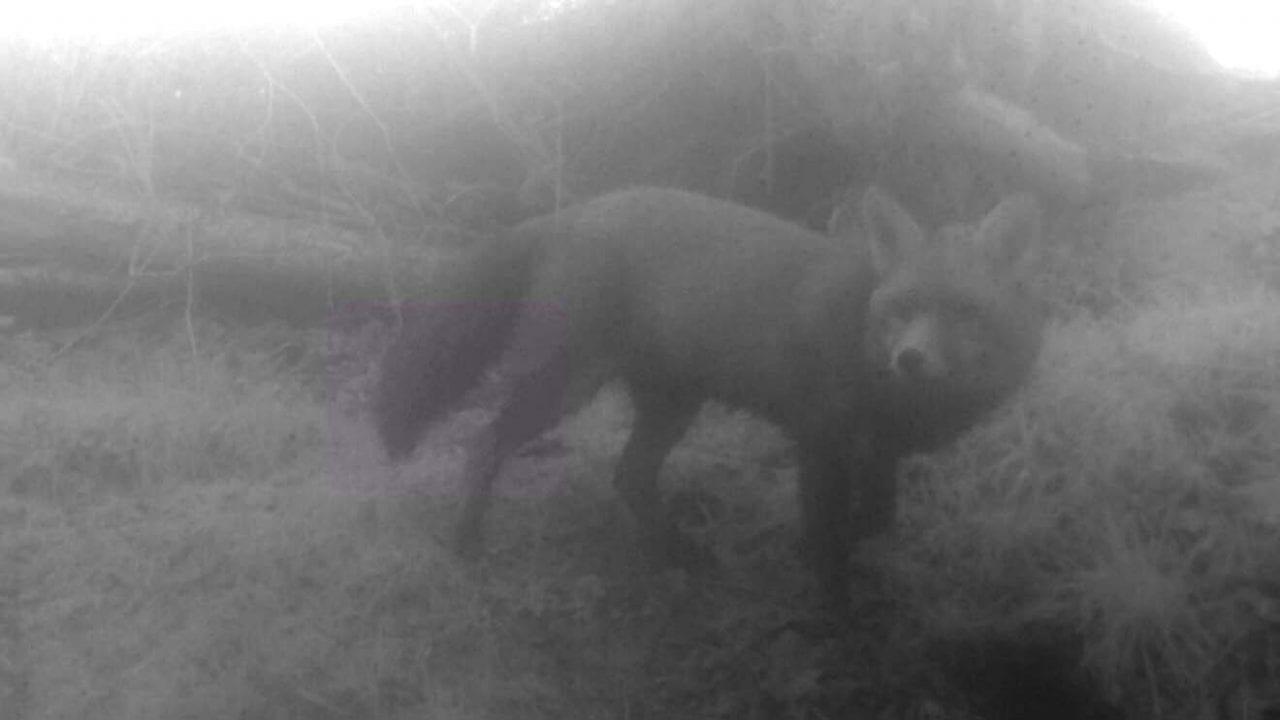 5 01150093_Moment Misty fox lwr sett EC